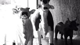 Detalhe Coleção de Vacas